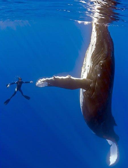 фото голубой кит